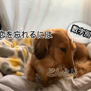 失恋の乗り越えかた*数字別ヒント【数秘】