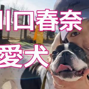 川口春奈の愛犬アムの犬種!出会いと洋服が可愛い!シャンプー情報も
