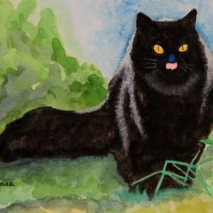 黒猫クロちゃん