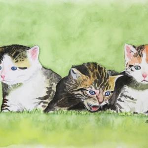 子猫3匹ニャー