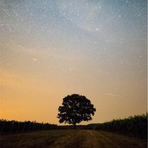 【天使の独り言】天に星が輝いていても