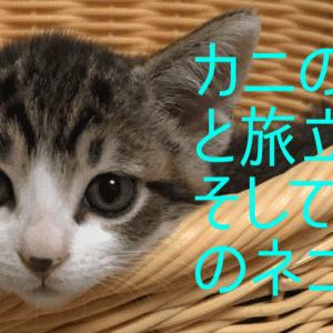 カニの成長と旅立ち…そして3匹のネコは?