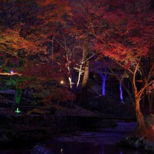 東山公園(たつの市)の紅葉 ~ライトアップも行われる播磨の紅葉スポット~