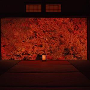 但馬安国寺のドウダンツツジ ~名画のように美しいツツジの紅葉~
