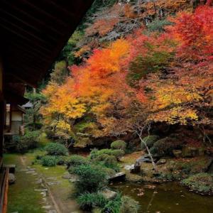 慧日寺(丹波市)の紅葉 ~凛とした雰囲気の漂う禅宗寺院~