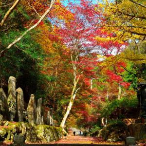 石龕寺 (せきがんじ) ~門前から本堂まで紅葉が彩る~