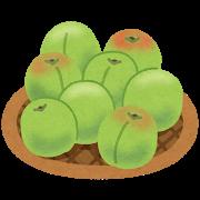 小梅の季節 生梅を食べてみた