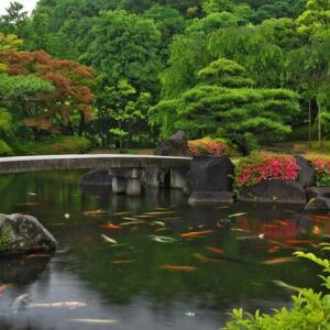 日本の庭園  姫路市好古園より