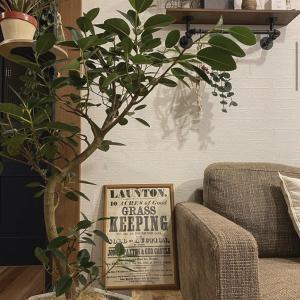 【植物のある暮らし】おしゃれさんから学ぶ観葉植物の飾り方アイデア特集
