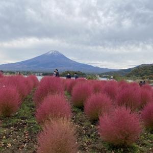 【大石公園】赤く染まったコキアと富士山のコラボが見える話題のスポットに行ってきた!