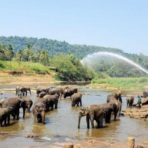 """ピンナワラの""""ゾウの孤児園""""で、水浴びをするゾウさんを眺める!"""