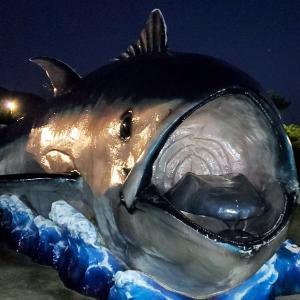 古仁屋港付近で食べた寿司よりも、スフィンクスのような家猫が記憶に残る【奄美大島旅行記㊵】
