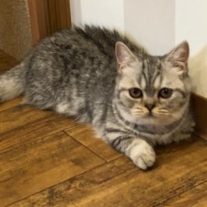 ねこ猫ネコ