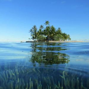 無人島に朝倉未来、シバター、へずまりゅう、syamu、堀江、ひろゆきの内の1人と一生生活するとしたら