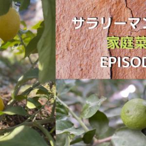 サラリーマンが作る家庭菜園EPISODE5