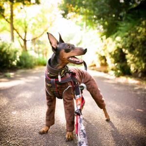 りんちゃんロング散歩に行く