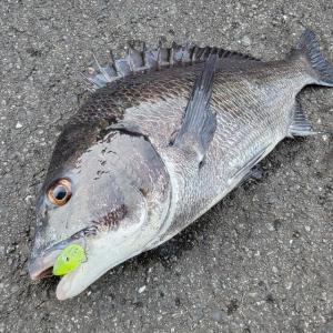 【釣行 8月3日】LGポッパーで楽しむ夏の釣り