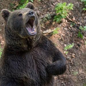 振り返るとクマ‼ 午前4時半の登山道で熊に襲われる 丹波市 兵庫