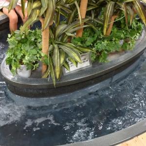 岩手県盛岡市渋民にあるイオン内の産直コーナーが楽しい!足湯や地元の名産がたくさんあります。