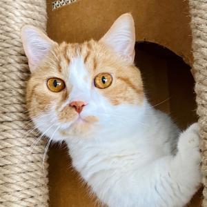 【猫学】猫の瞳は十ニャン十色。猫の目の色の種類や、目の色が違う理由を解説。