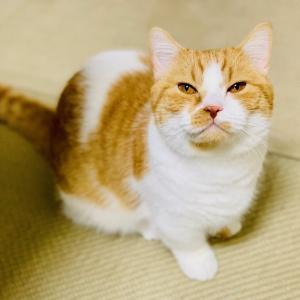 セルフカットしました!飼い主の髪型が変わったときの愛猫の反応やいかに?