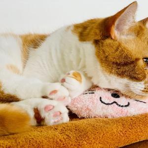 愛猫で元気をチャージする在宅勤務の休憩時間