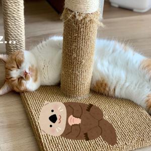 暑い季節に出現するのは、短足のラッコ猫さん。