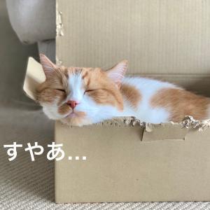 夫婦のエアコン設定温度の戦いが始まる!愛猫の支持を得られるのは果たしてどちら?