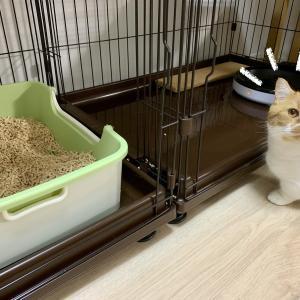 6月前半の愛猫のトイレ事情。
