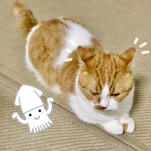 ブログ執筆のお邪魔をするイカ耳猫さん。