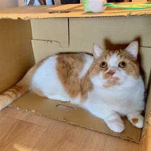 【シュレディンガーの猫】るるちゃんは箱の中にいる?いない?