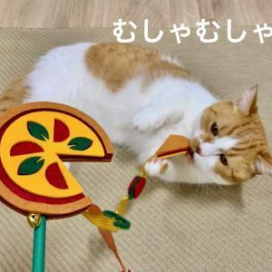 AwesomeStoreの猫じゃらしでピザをむしゃむしゃ。