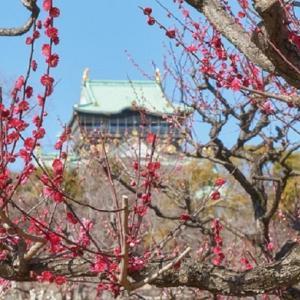春を先取り!大阪城公園の梅花見をご紹介!