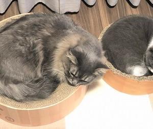 一人暮らしの猫2匹飼い 幸せなことと、ちょっと大変なこと