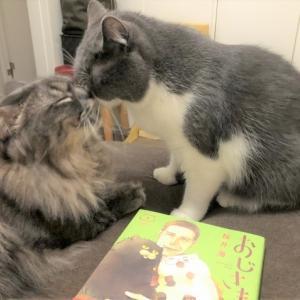 【おじさまと猫】ふくまるが、ぬいぐるみだけど、生きている!