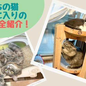 わが家の爪とぎを写真付きで全紹介!2匹の猫の一番のお気に入りはどれ?