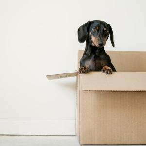 単身赴任で引っ越し費用を安く抑える方法