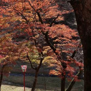 養老の滝・紅葉