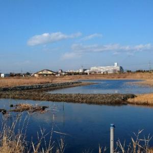 散歩の贅沢~✨大柏川第一調節池緑地✨