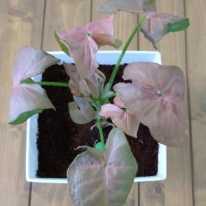 【夏は成長期☀️】我が家の植物大集合🌱