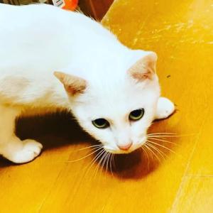 ひょっこりはん by     白猫