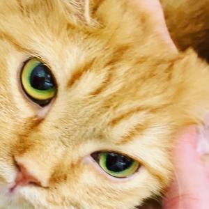 愛猫じゅりちゃんのレポレポ