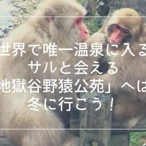 世界で唯一温泉に入るサルと会える地獄谷野猿公苑へは、冬に行こう!