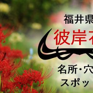 【福井県】彼岸花の名所・穴場スポット一覧情報