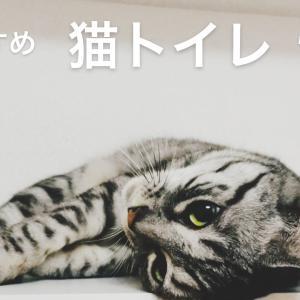 【おすすめ】買って良かった猫トイレ、砂、シート【消臭抗菌】