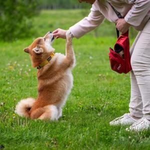 【感動】老犬と里親さんの出会いの物語