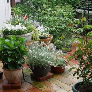 雨の日曜日の庭