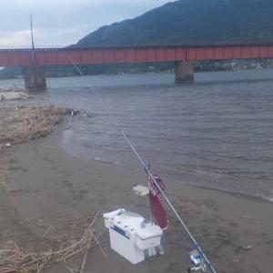 由良川河口(神崎)も盛期間近です。