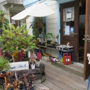 【体験】Flower Labo(フラワーラボ) ハーバリウム作り体験も!アニメの聖地巡礼も堪能できるお花屋さん!