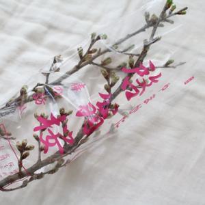 【花のある暮らし】地元を感じる「啓翁桜」を購入しました!